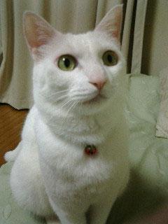 maiko_cyuumoku