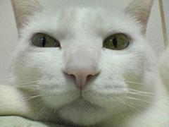 別猫モードのまいこさん