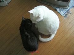 チョビたん(白)とうーちゃん(黒)